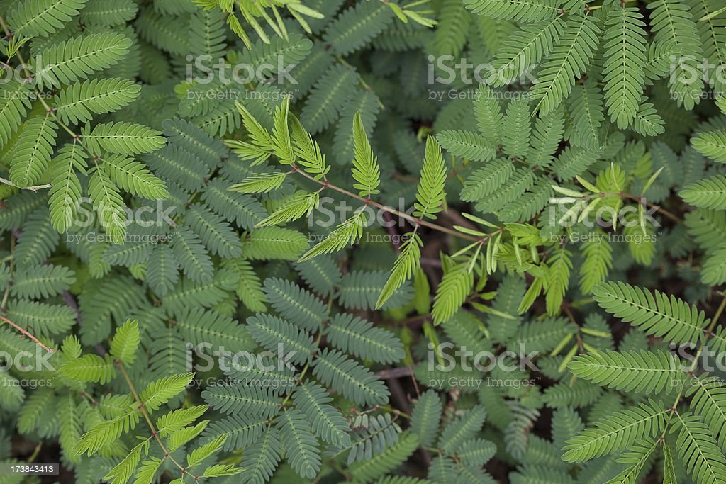 green leafy background (XL) royalty-free stock photo