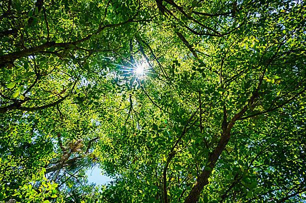 Green Leafy Background with Sunburst stock photo