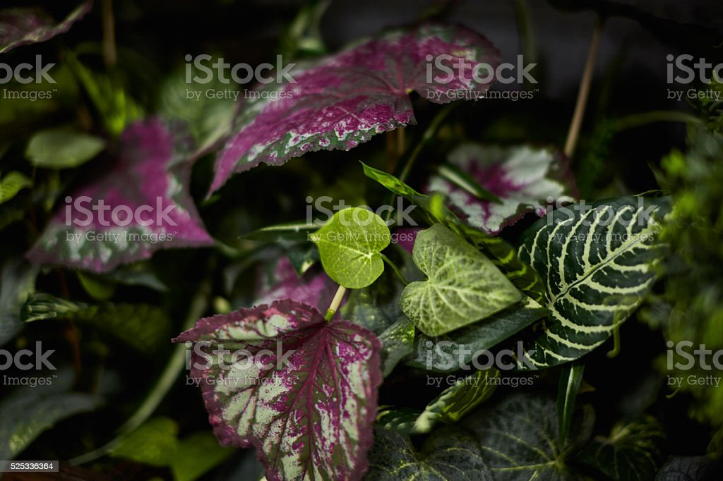 Green Leafy House Plant stock photo