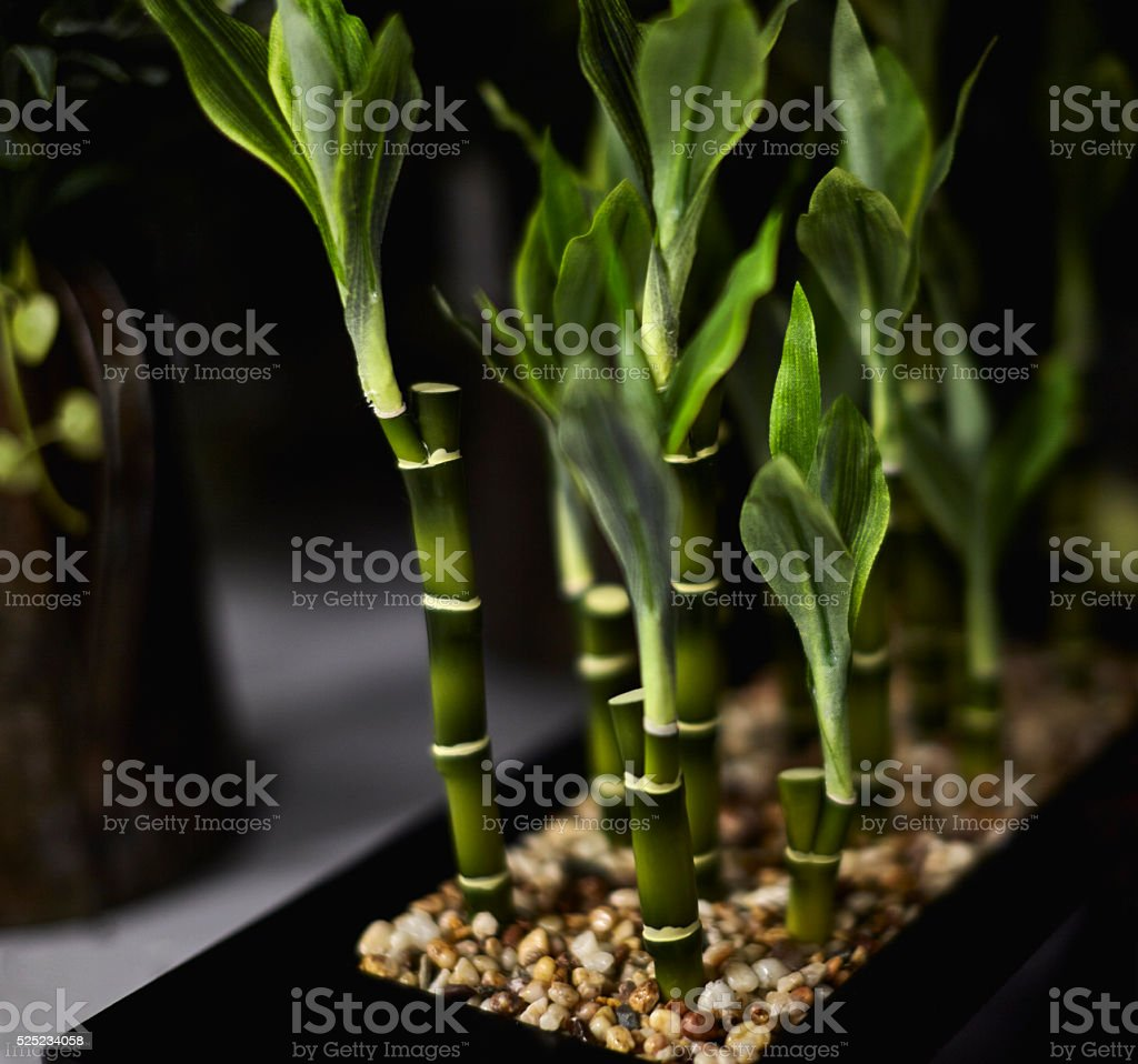 Green Leafy House Plants stock photo