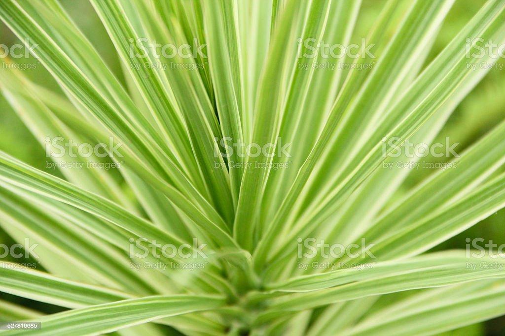 Green leafy plant stock photo
