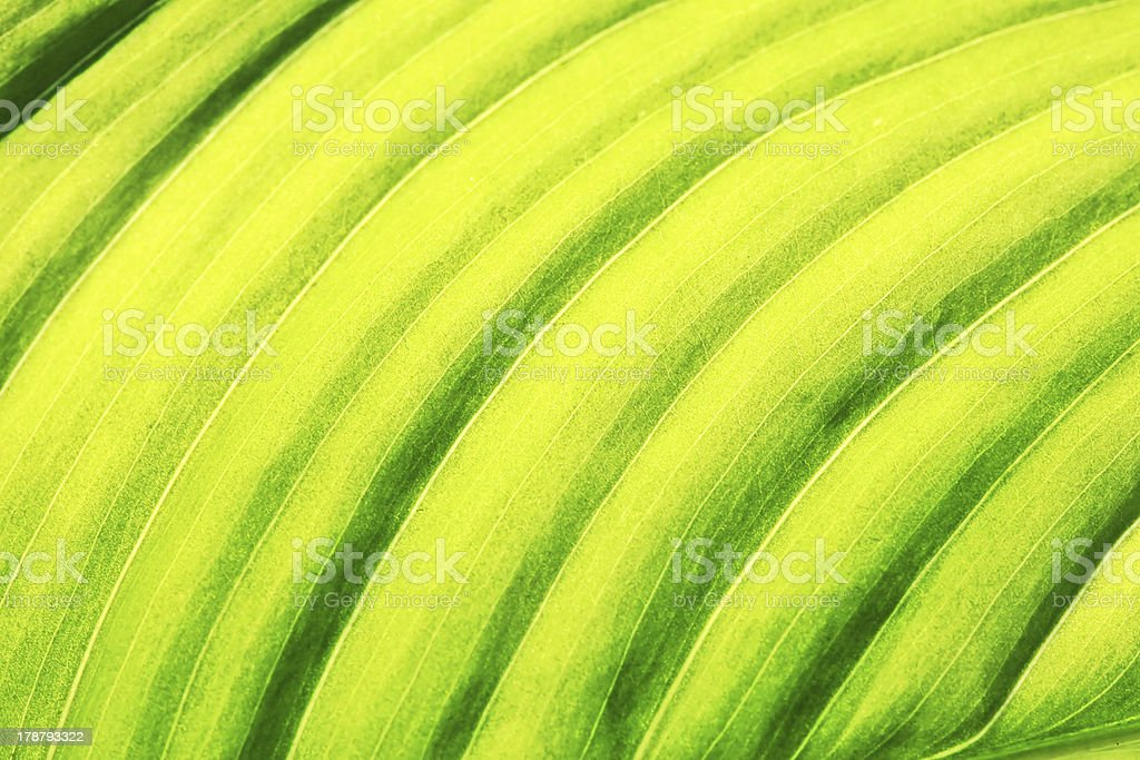 Green leave surface. royalty-free stock photo
