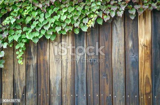 Foliage wild ivy on vintage wooden background