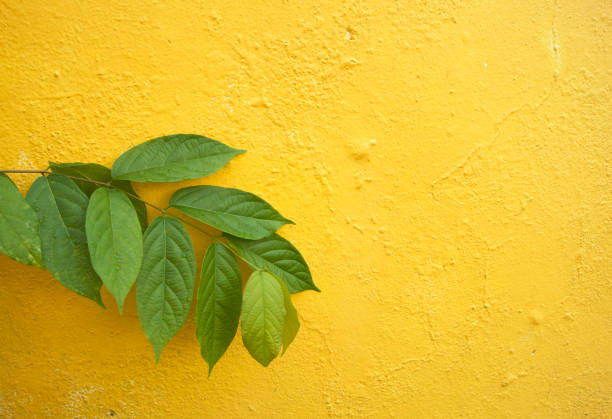 green leaves against a yellow wall stock photo