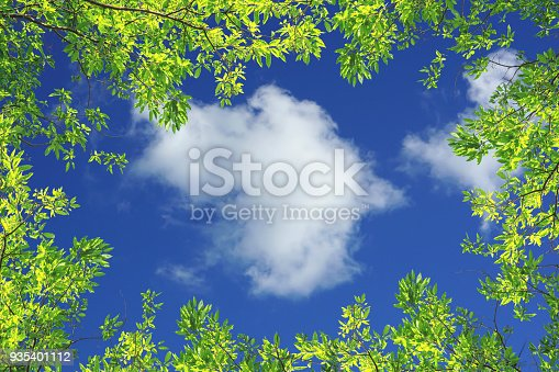 Green leaves against blue sky and white clouds nature background with copy space