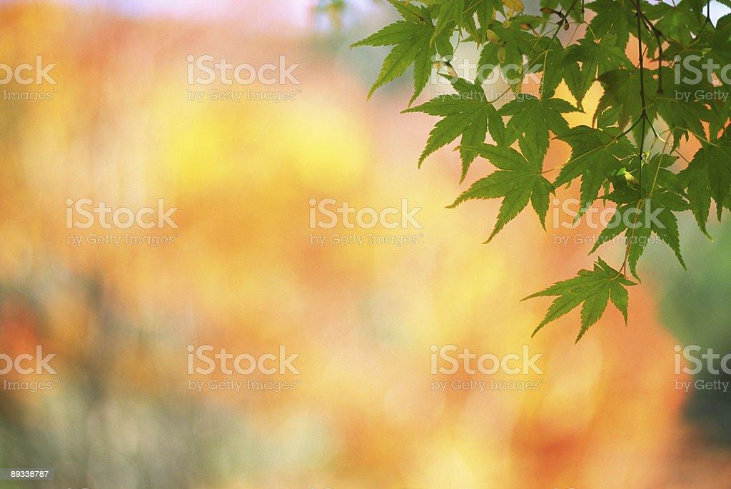 Green leaves against orange royalty-free stock photo