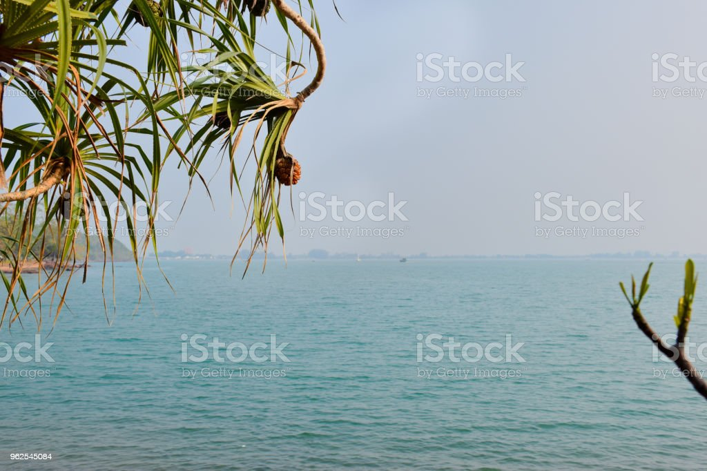 Green leaves and beautiful sea views. - Royalty-free Backgrounds Stock Photo