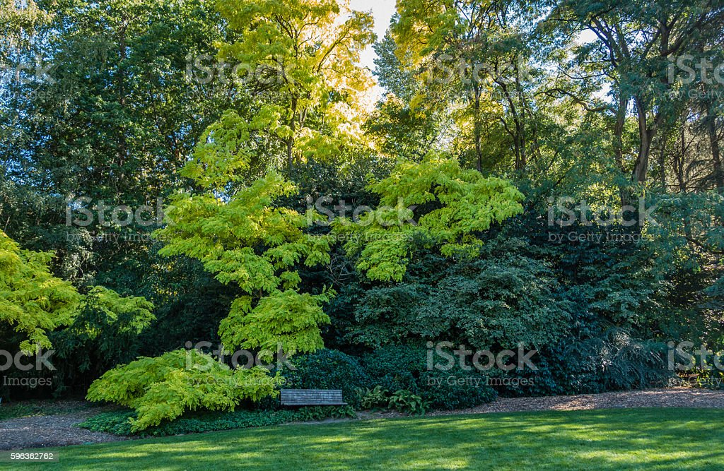 Green Leaves And Bench royalty-free stock photo