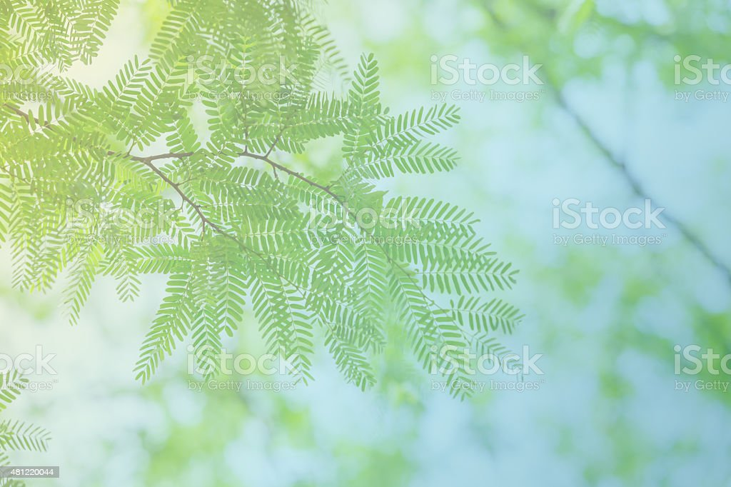 green leaves and branches, pastel tone color stock photo