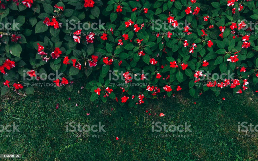 Green leaves and little flowers background. stock photo