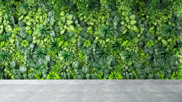 灰色混凝土地板上的綠葉和植物牆背景 - 植物學 個照片及圖片檔