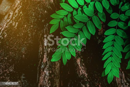 abstract green leaves and tree textures, nature background