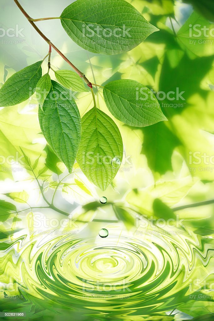 Green Leaves And Water Drops stock photo