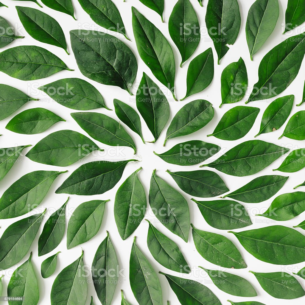 Green leaves arranged in spiral shape stock photo