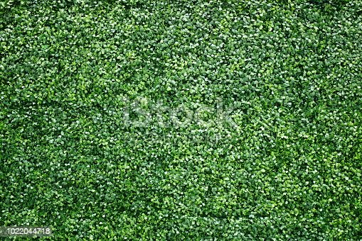 Plant, Thailand, Wall - Building Feature, Green Color, Artificial