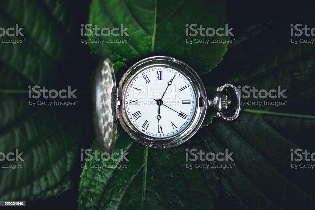 Grüne Blätter Hintergrund und alte Silber Pocket watch Uhr – Foto