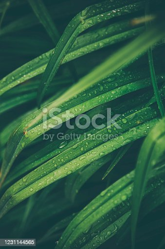 Close-up on wet leaves after rainfall