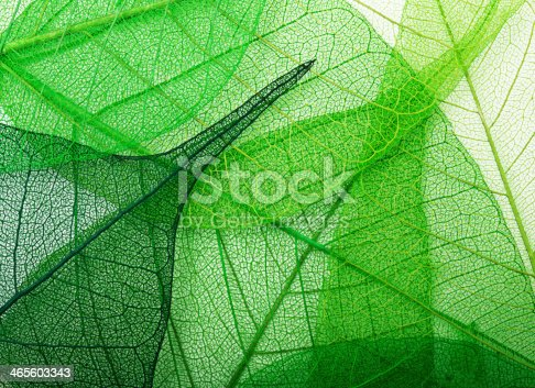 1155045999istockphoto Green leaves background 465603343