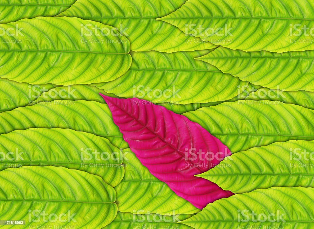 green leaves background royalty-free stock photo