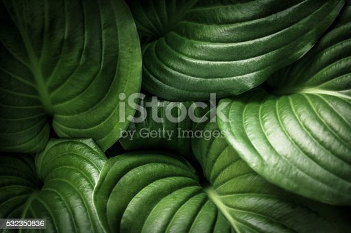 istock Green Leaves Background 532350836