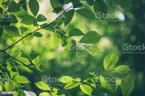 Green leaves background picture id668288668?b=1&k=6&m=668288668&s=612x612&h=nwmaqqcoi nycdqqutpx6pj1pbjewf nbpbvbe1lxbi=