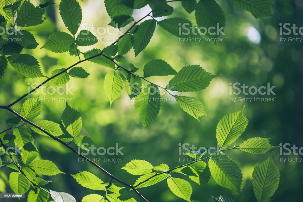 Green leaves background stock photo