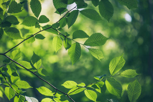 green leaves background - trees stock photos and pictures