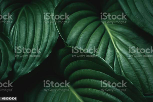 Photo of Green Leaves Background