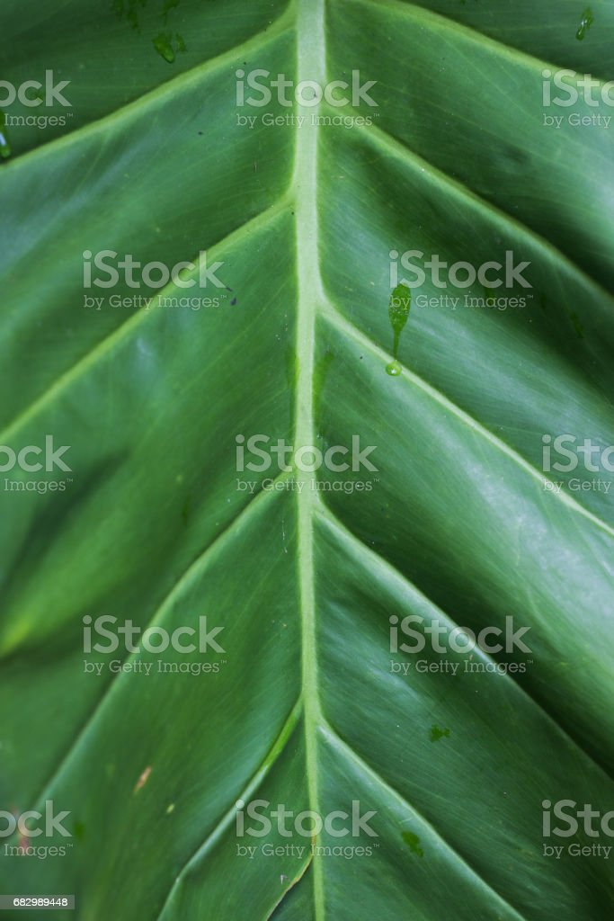 Green Leaves Background foto de stock royalty-free