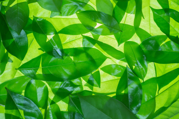 green leaves background - foliate pattern stock photos and pictures