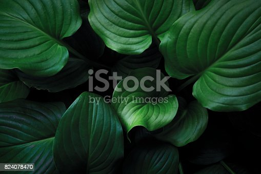 istock Green Leaves Background 824078470