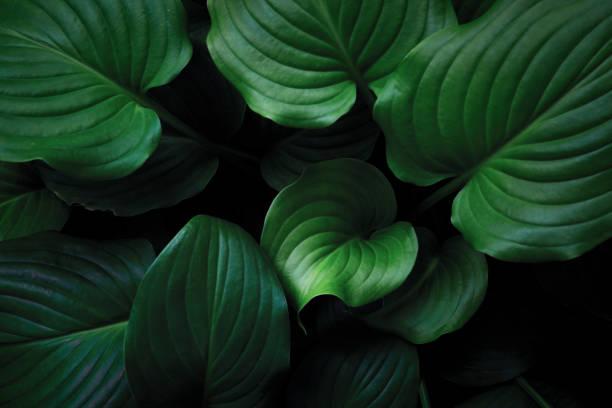 Green leaves background picture id824078470?b=1&k=6&m=824078470&s=612x612&w=0&h=kw xstu4bugjpxm2j7cibvddmmwtuonhzy5uauekbnk=