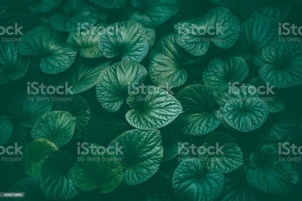 Grüne Blätter Hintergrund – Foto