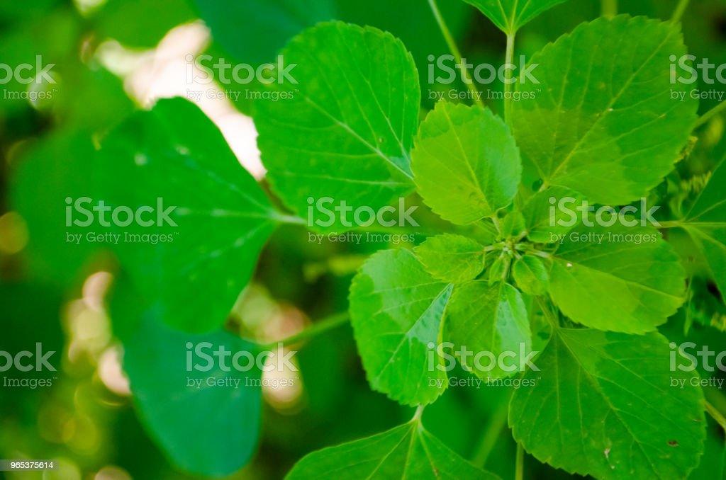 Green Leaves Background zbiór zdjęć royalty-free