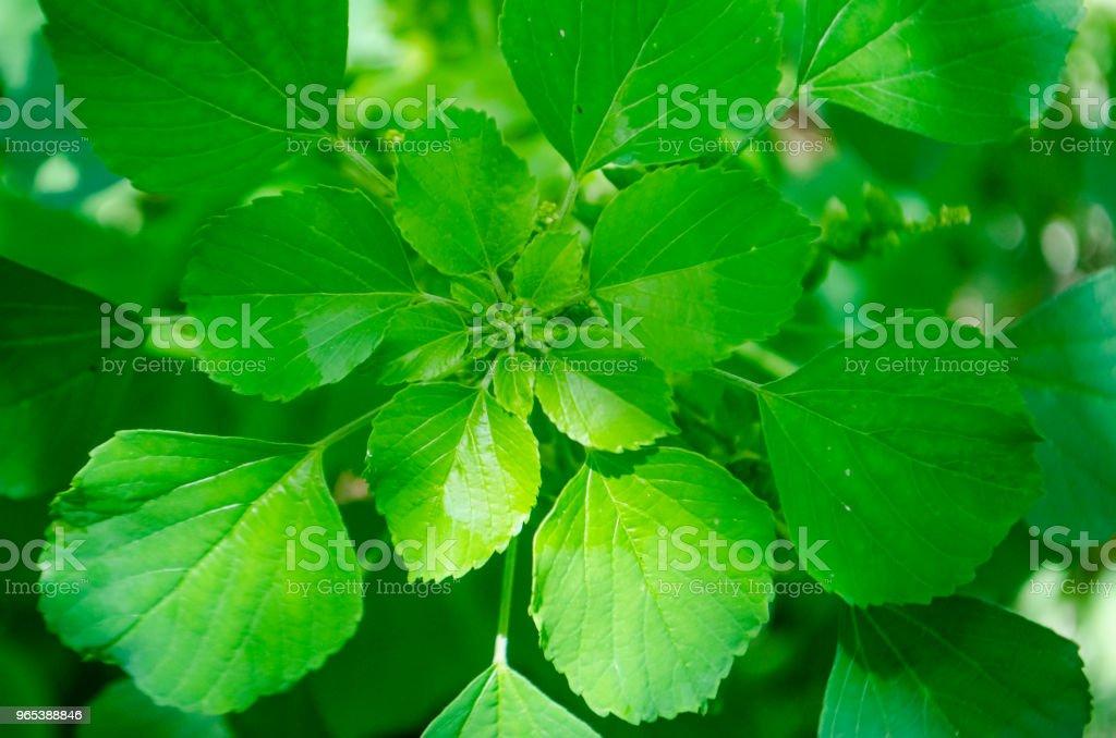 녹색 잎 배경 - 로열티 프리 0명 스톡 사진