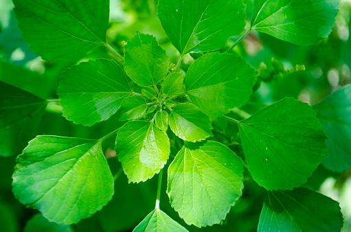 녹색 잎 배경 0명에 대한 스톡 사진 및 기타 이미지