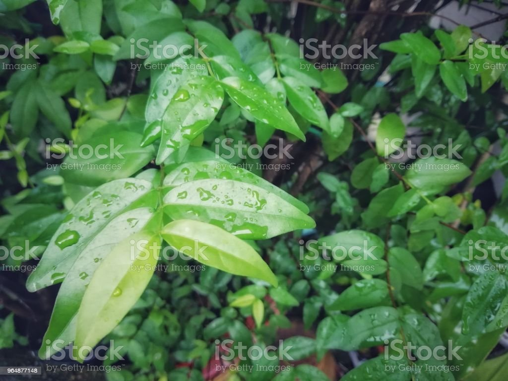 Green leaves background. Picture in vintage tone. royalty-free stock photo