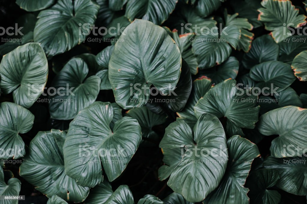 green leaves background with green environment stock photo