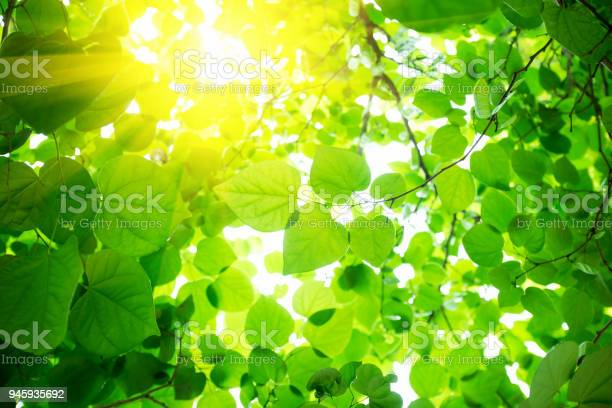 Photo of Green leaves background with sunlight
