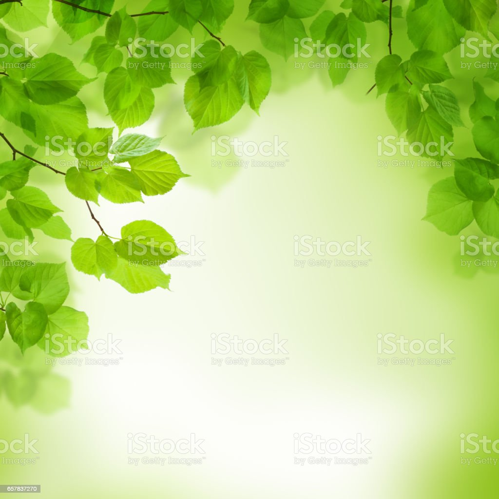 Green leaves border, abstract background stock photo