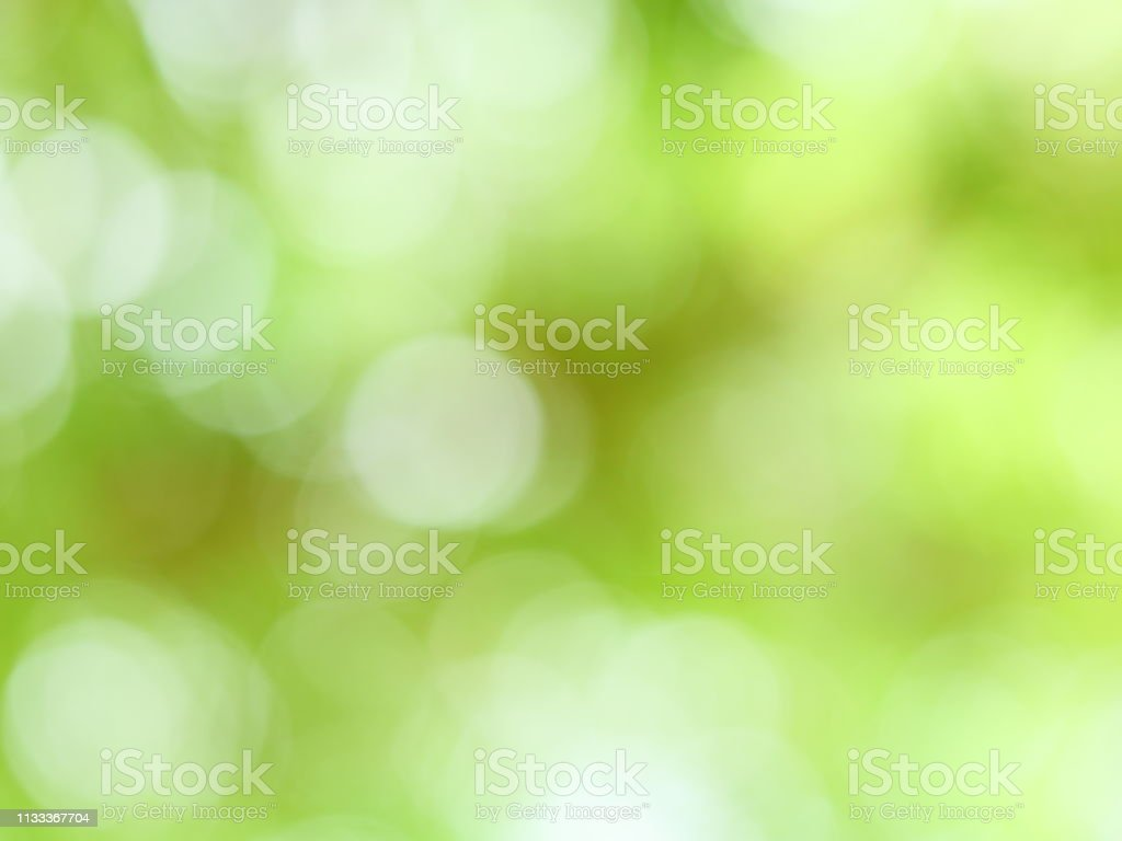 Green leaves budding in spring stock photo
