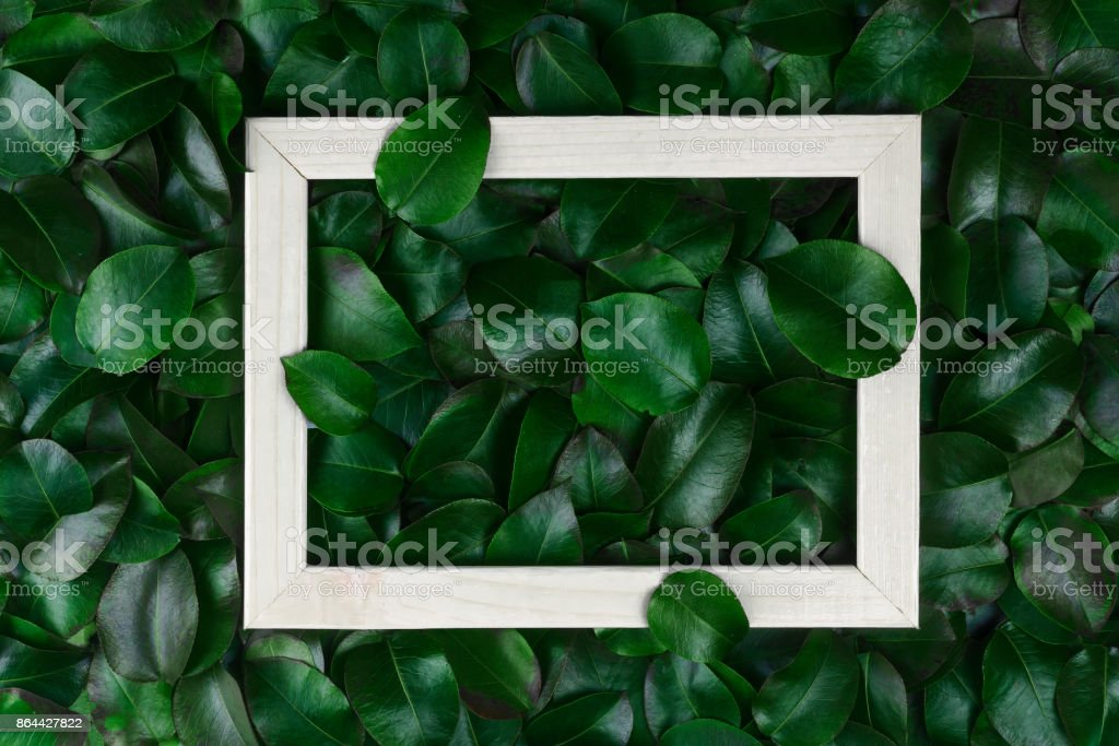 green leaves. Creative layout made of leaves with paper card note or frame. A flat lay. Nature concept stock photo
