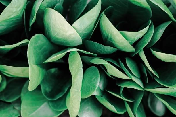 grüne blätter kreative muster - blumendrucktapete stock-fotos und bilder