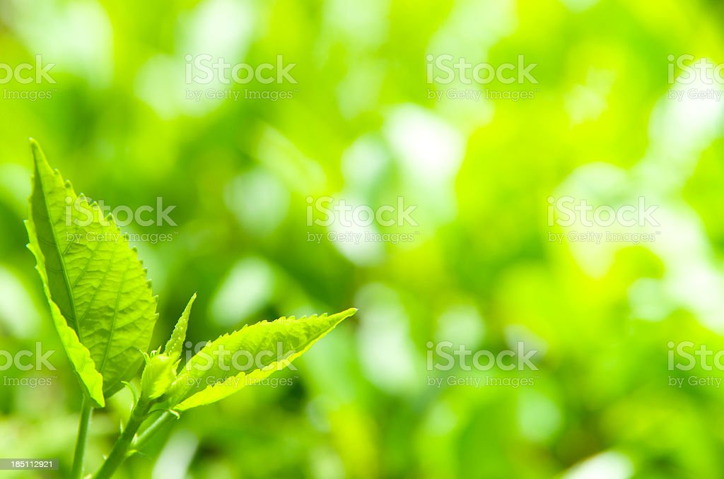 Green leaves environment royalty-free stock photo