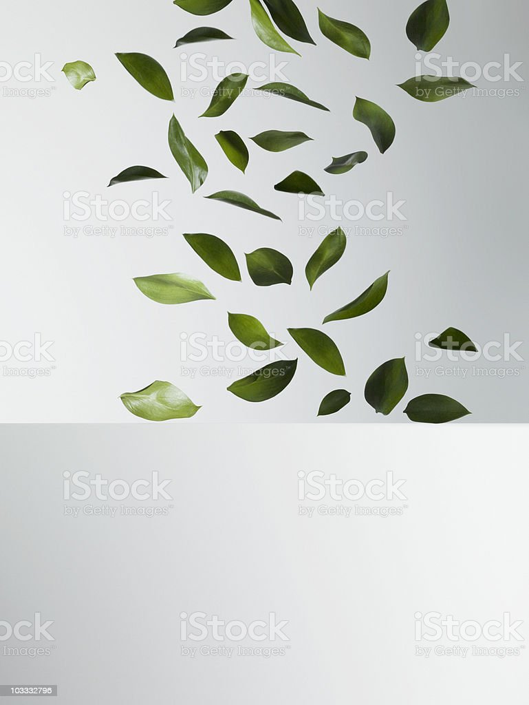 Green leaves falling stock photo