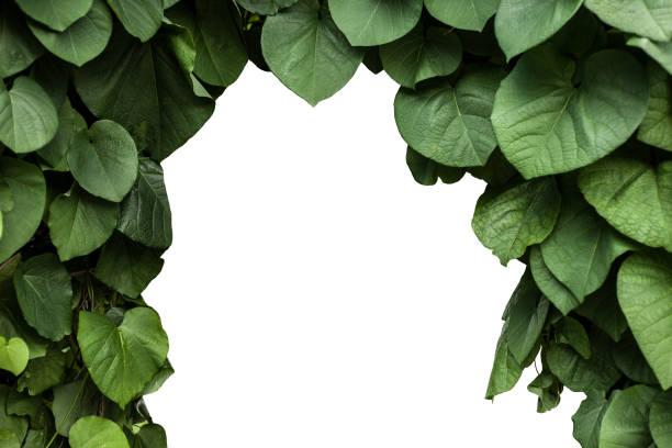 Green leaves foliage frame isolated on white background stock photo