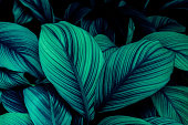 istock green leaves for background and wallpaper 1218557934
