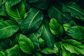 istock green leaves for background and wallpaper 1221724425