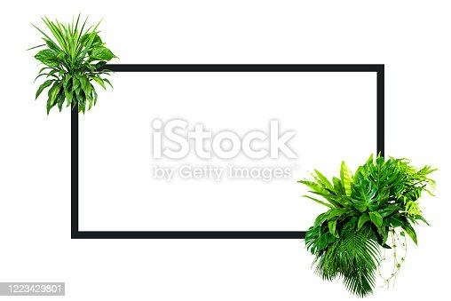 1145104190 istock photo green leaves for background and wallpaper 1223429801