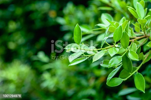 istock Green leaves for background 1001294976